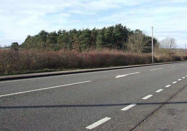 Little wood across the A5