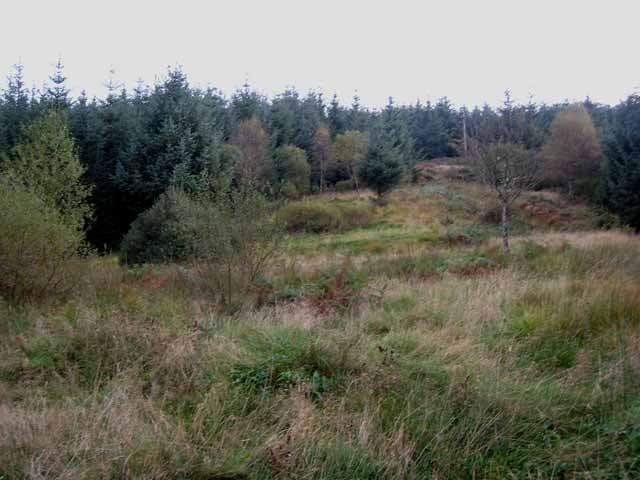 Clearing, Clatteringshaws Forest