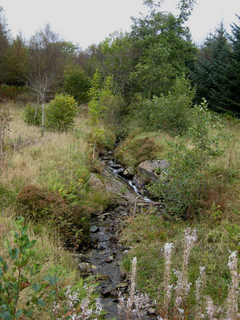 Headwaters of Craigshinnie Burn, Clatteringshaws Forest