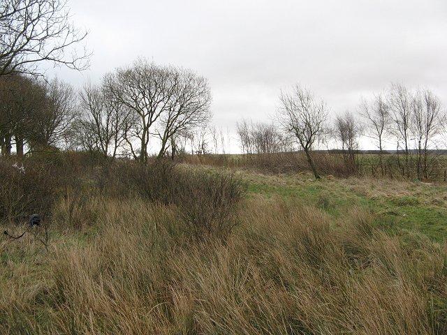 Waste ground, Springhill