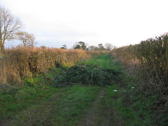 Henhambridge Way