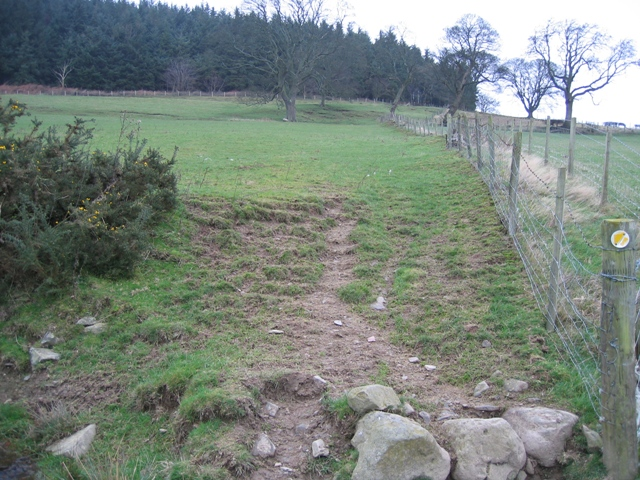 Footpath to Moel Evan
