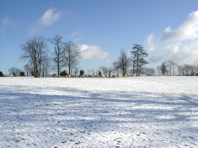 Sheep in snow-covered parkland, near Owlpen Stables