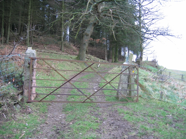 Gate into Moel Evan Forest.