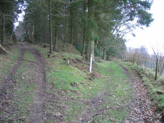 Track Junction in Moel Evan Forest