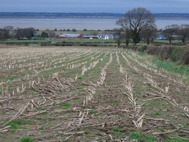 A Harvested Field