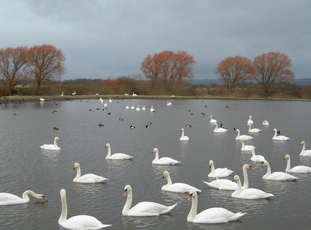 The Whooper Pond
