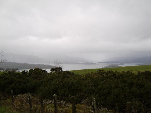 Woodland near Loch Lomond