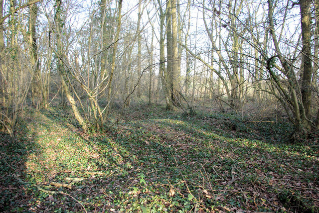 Hollows in Wick Wood