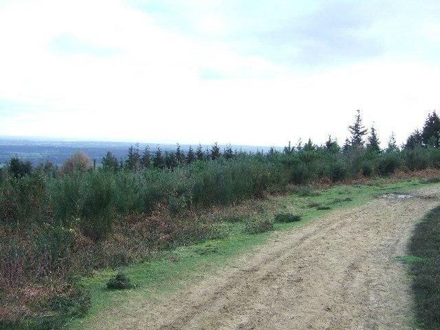 Track through Redlands Wood