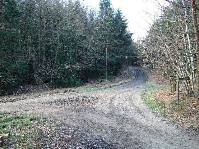 Track Junction in Redlands Wood