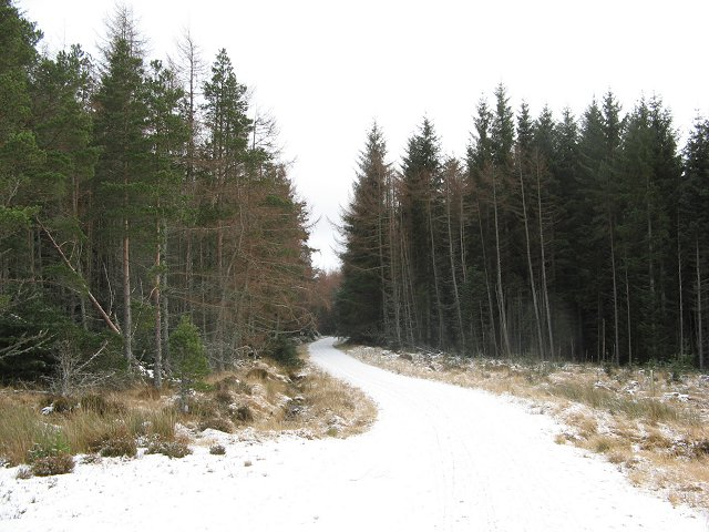 Forest road, Glenmore Forest