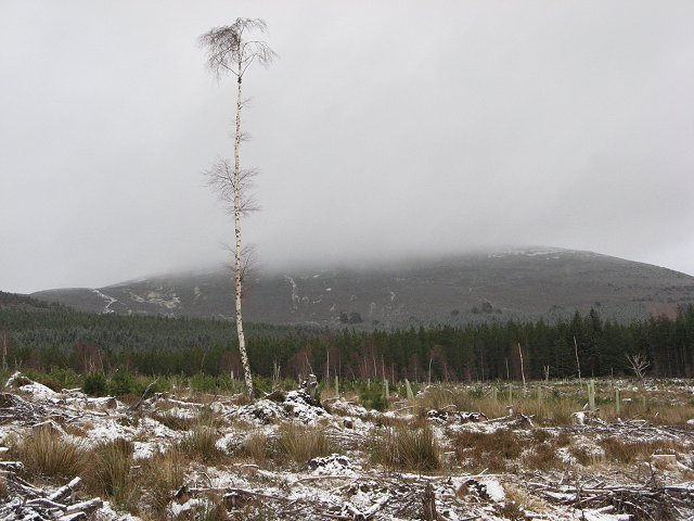 Survivor, Glenmore Forest