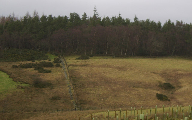Moorland near Loch Lomond