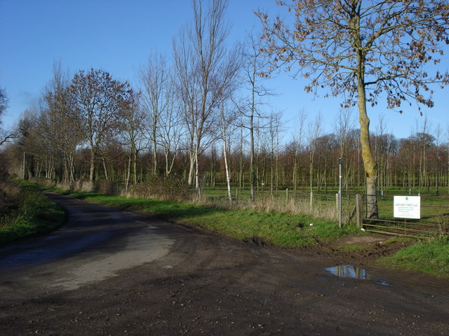 Tree plantation, Showborough