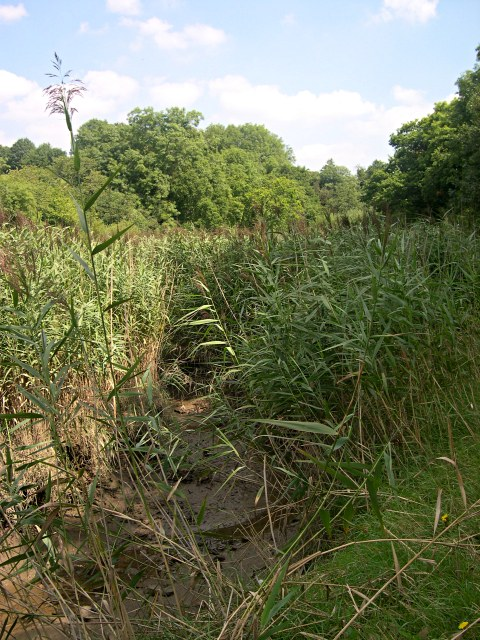Reed Beds in the Valley