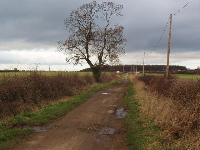 Tree on Collingham Moor