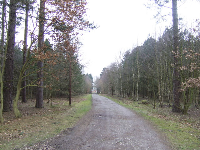 Track through the forest