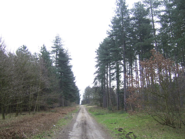Laughton Forest