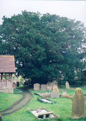 Norbury Yew