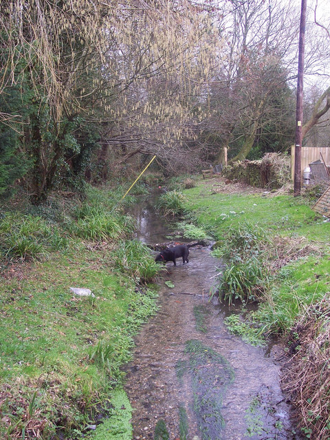 Stream in Swallowcliffe