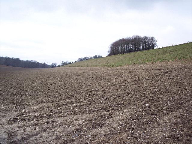 Farmland between Ridge and Chilmark