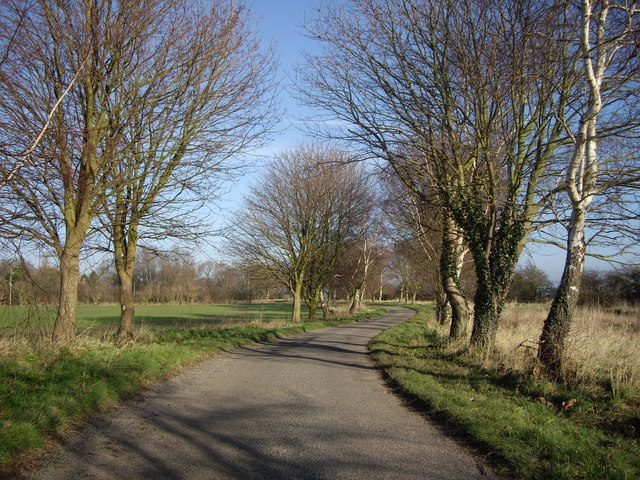 Road Under The Trees Towards Ongar Hill