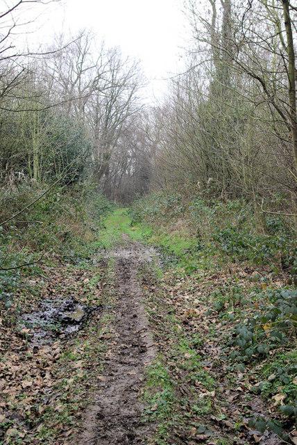 Foxborough Wood