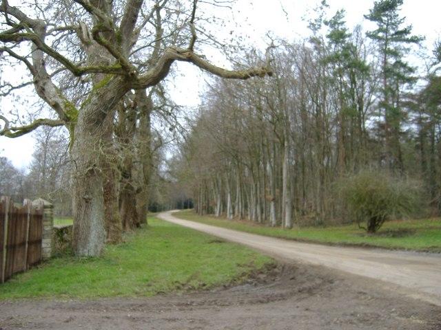 Bullpark Wood