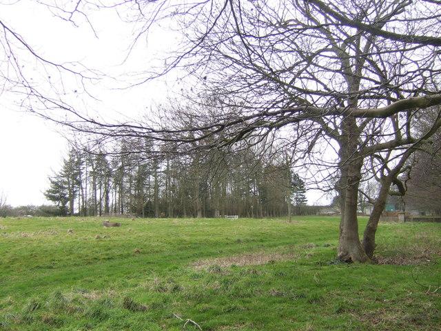 Copse near Blyborough Grange