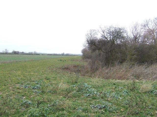 Edge of Blyborough Covert