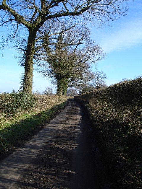 Burchells Wood Road