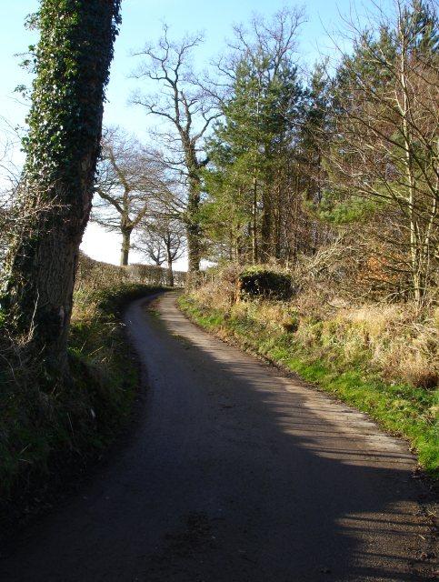 Small conifer plantation