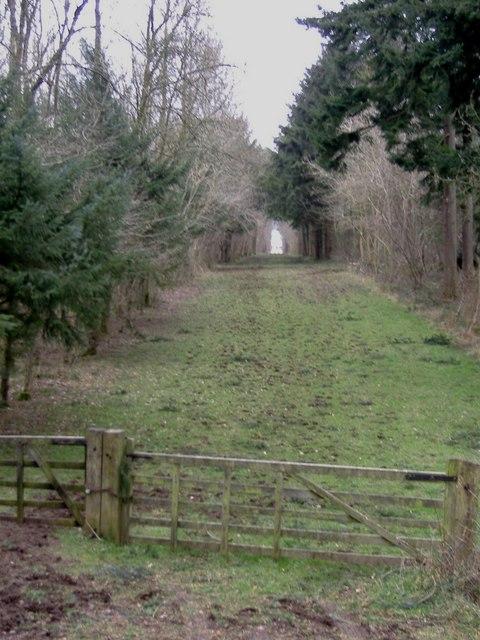 Ride through Swangrove wood