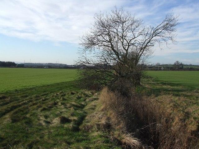 Hedgerow beside footpath