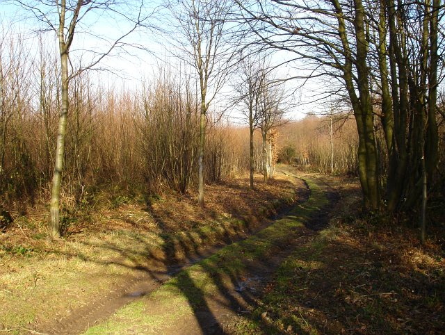 Track in Stedehill Wood