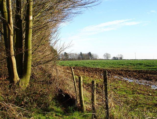 Field south of Flint Lane