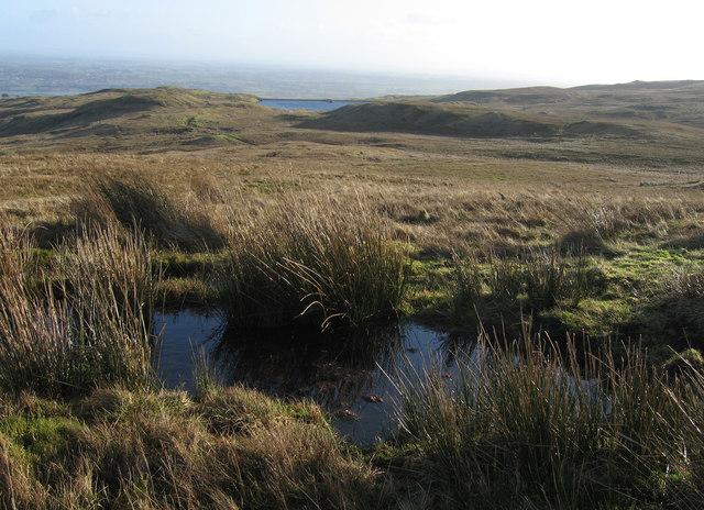 Very Wet Moor