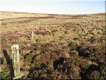 NS7133 : Old fence below Spirebush Hill by Chris Wimbush