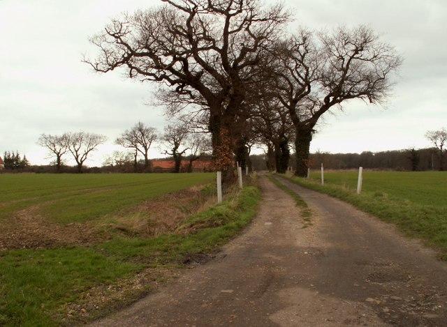 Road to Abbey Farm