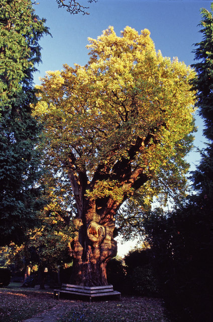 Minchenden Oak, Garden of Remembrance, Waterfall Road, N14.