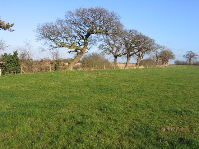 Field Boundary near Lea Newbold Farm