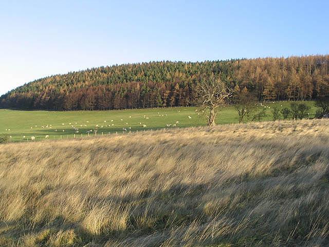 Rough grazing near Chatton Park