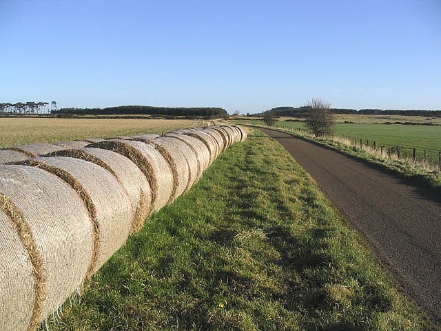 Bales by the road to Warenton
