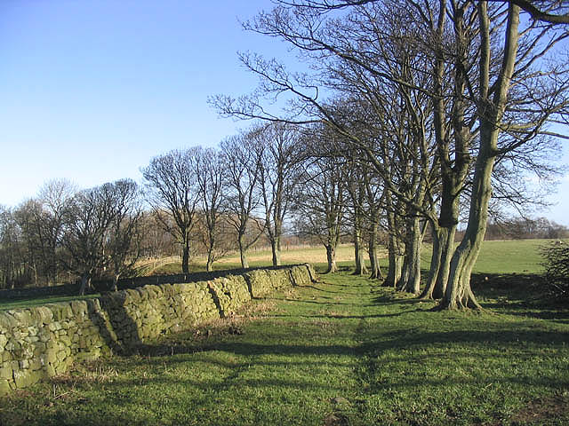 Public footpath to North Plantation