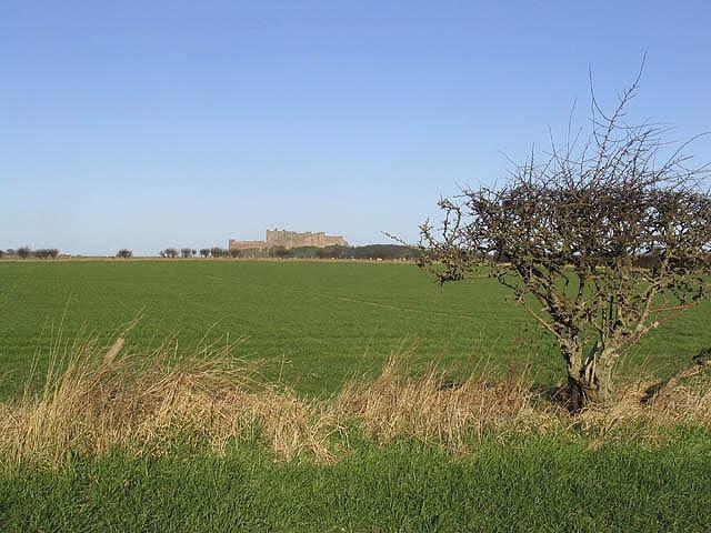 Pasture by Ingram Lane