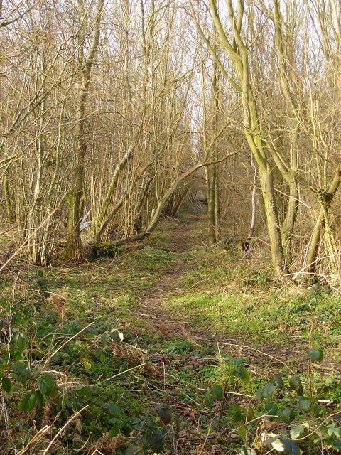 Footpath through Stedehill Wood