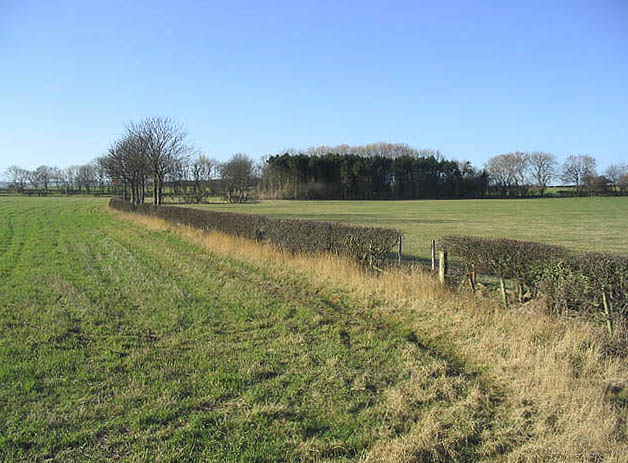 Hedge and fields near The Lodge