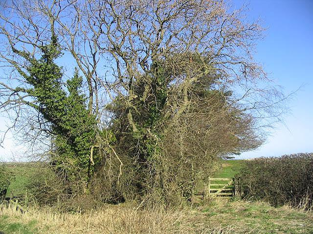 Trees and gate near Newtonbarns