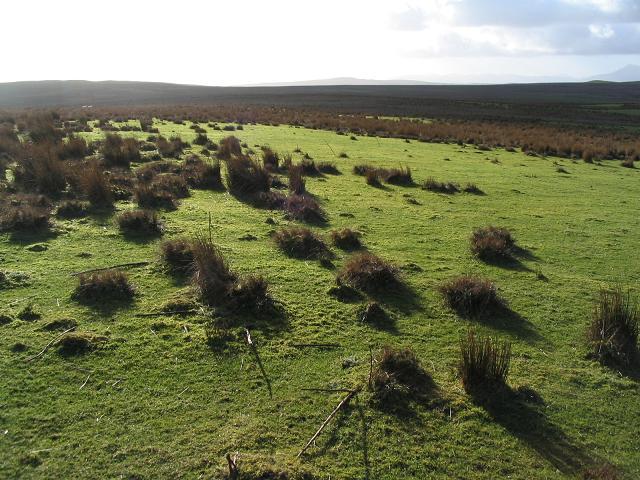 Islands of grass, Denbigh Moors